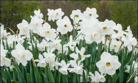 Athens Area Master Gardener Association | Athens-Clarke County