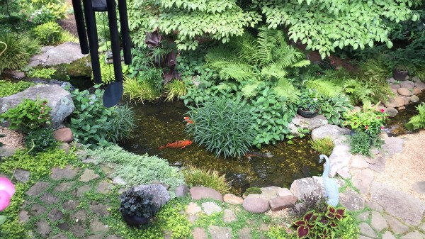 Pond Management Information