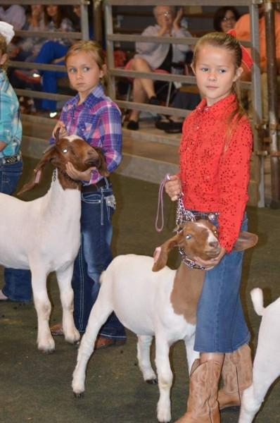 County Goat SHow