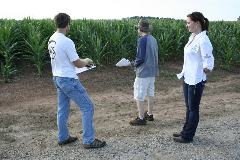 Farmers looking at a variety test