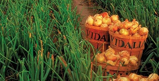 Vidalia-Onion-crop