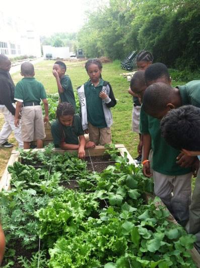 Garden Lesson Plans For Kindergarten